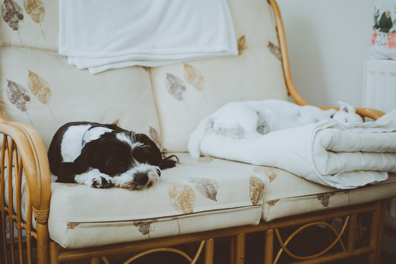 Canva - White and Black Dogs Lying on White Loveseat